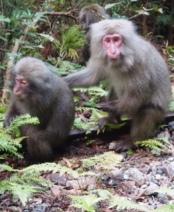 monkeynarrow